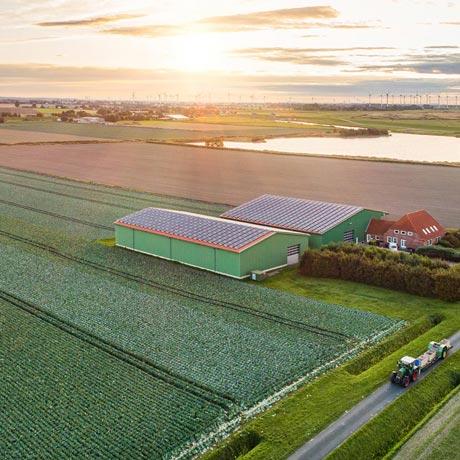 Cabbage Producer: Hof Johannßen - Neufelderkoog