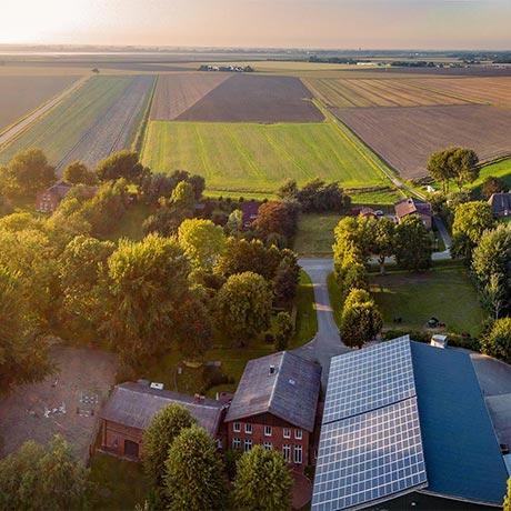Cabbage Producer: Hof Hagge - Zennhusen