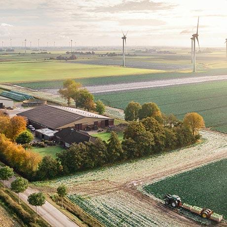 Cabbage Producer: Hof Peters - Kaiser-Wilhelm-Koog